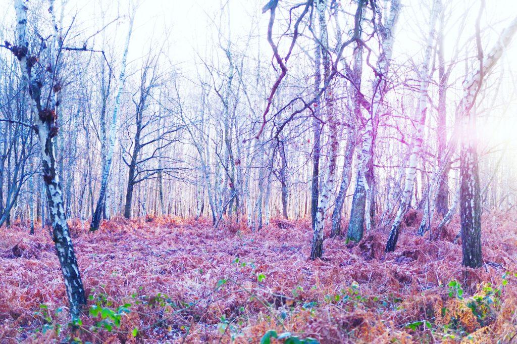 forêt domaniale de Notre Dame